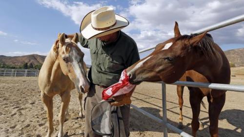 Leo da da mangiare ai cavalli