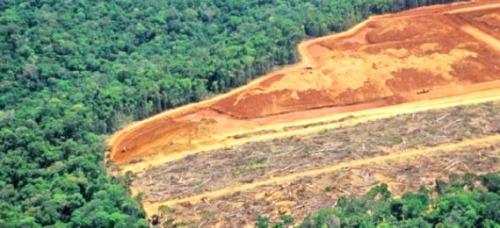 La Cina ha ruolo importante non soltanto nell'economia ma anche nell'ambiente mondiale. Si calcola che la sopravvivenza dei principali polmoni verdi del pianeta dipende dalla Cina, importatore e consumatore di legno da tutto il mondo, ma anche principale responsabile del disboscamento delle foreste tropicali. Lo afferma un rapporto dell'Agenzia investigativa ambientale diffuso Pechino.
