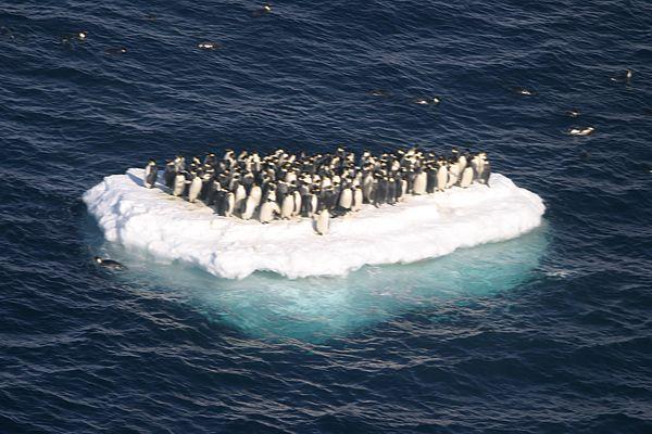 colonia di pinguini alla deriva