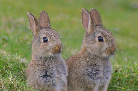 disegni-da-colorare-coniglietto-coniglio-pasqua