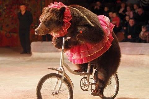 orso-circo